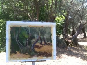 Olive Trees near Halki, Naxos